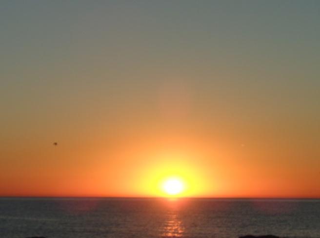 sunrise plus seagul.jpg