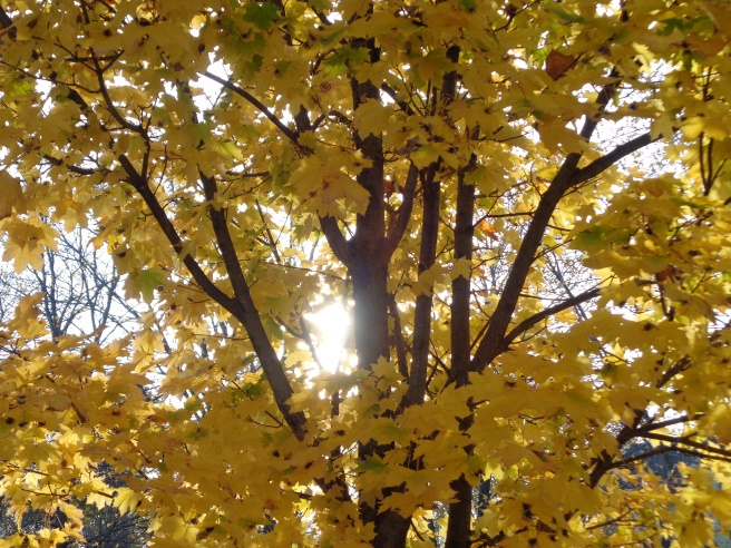 I miss golden autumn