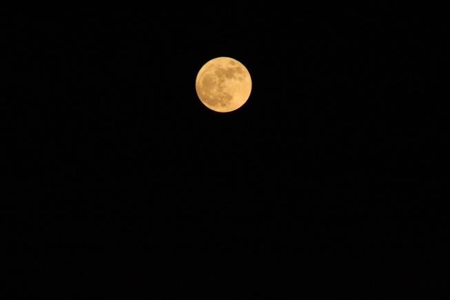 New year moon.jpg