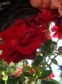 0000Red Rose2