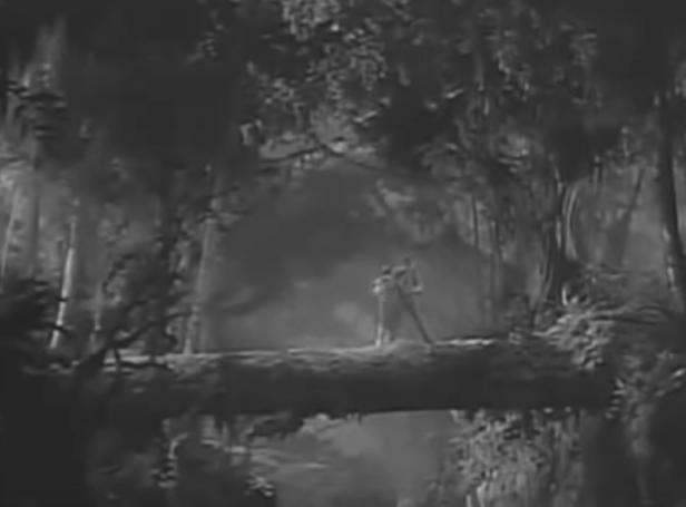log scene