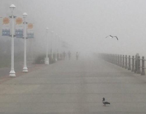 fog-w-people