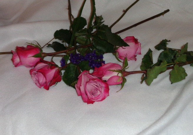 august roses.jpg